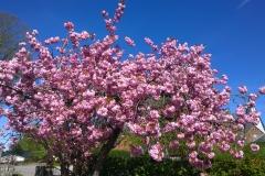 unsere Dorfstraße in der Blütenpracht