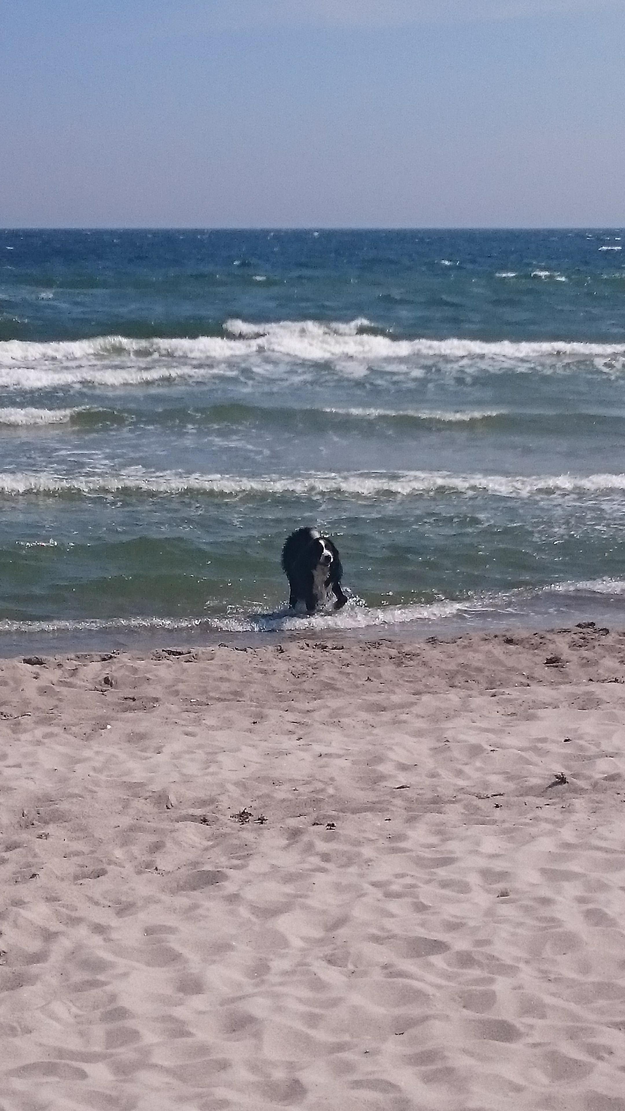 Ostseeurlaub und ihr Hund fühlt sich wohl