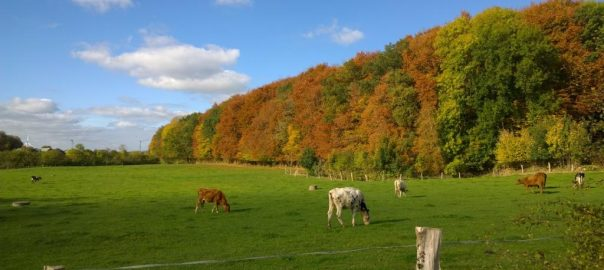 Herbst 2018 in Groß Quern